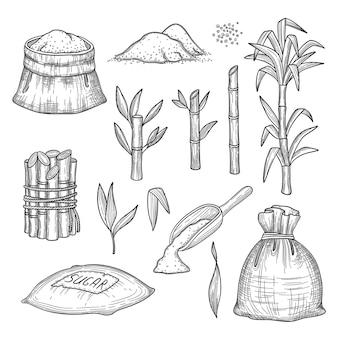 Trzcina cukrowa. rośliny pozostawiają świeże gospodarstwo grawerowanie zbioru cukru ręcznie rysowane ilustracje zestaw. naturalna trzcina cukrowa, zbiór cukru trzcinowego, ekologiczna łodyga
