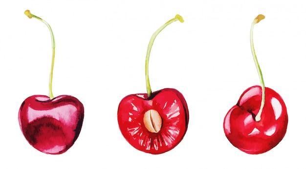 Trzy czerwone wiśnie, zestaw jagód akwareli,