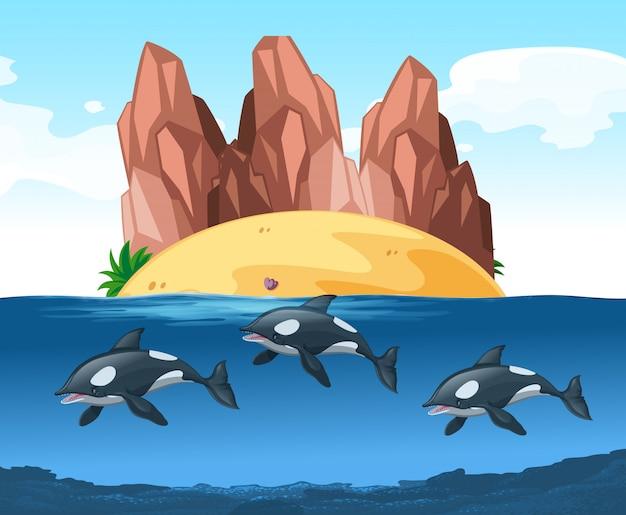 Trzy delfiny pływające pod wodą