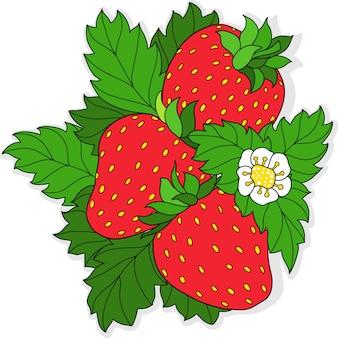 Trzy dojrzałe truskawki i kwiat na tle zielonych liści ilustracji wektorowych