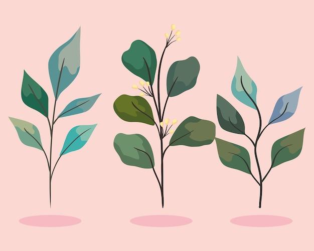 Trzy gałązki z liśćmi