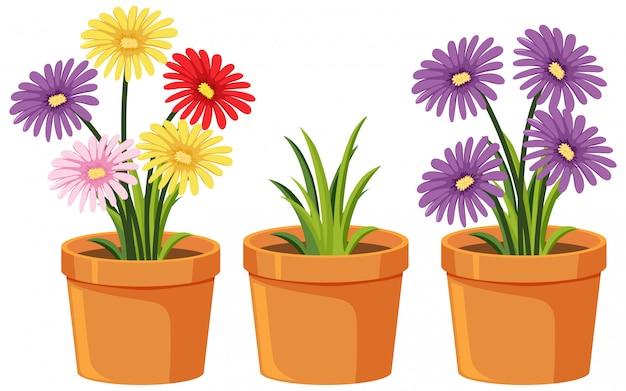 Trzy gliniane doniczki z pięknymi kwiatami