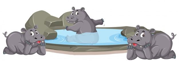 Trzy hipopotamy bawiące się w stawie