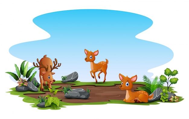 Trzy jelenie grające na polu