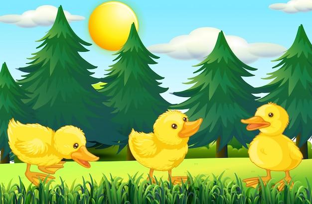 Trzy małe kaczątka w parku
