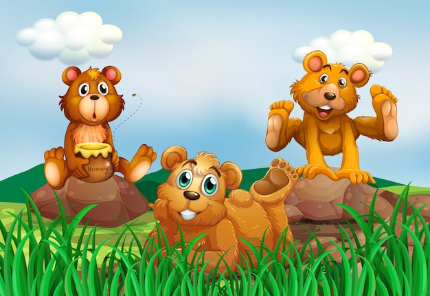Trzy niedźwiedzie w polu