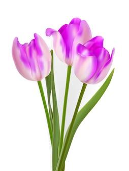 Trzy piękne tulipany, na białym tle.