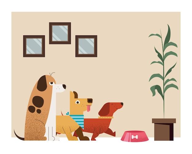 Trzy psy w scenie domu