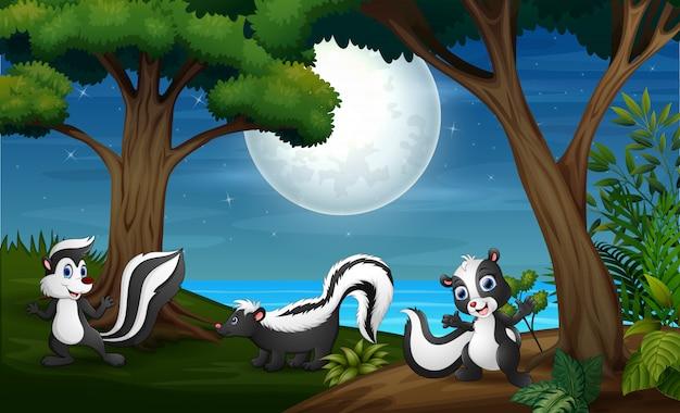 Trzy skunksy w lesie w nocy