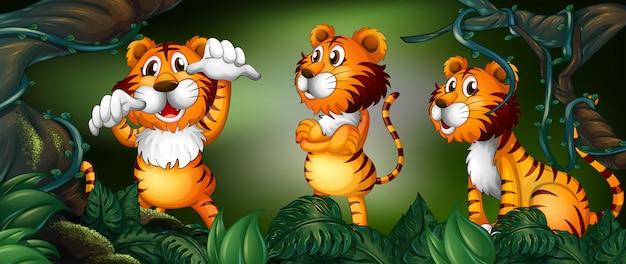 Trzy tygrysy w lesie deszczowym