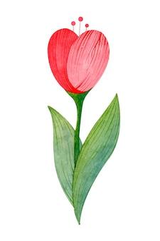 Tulipan akwarela