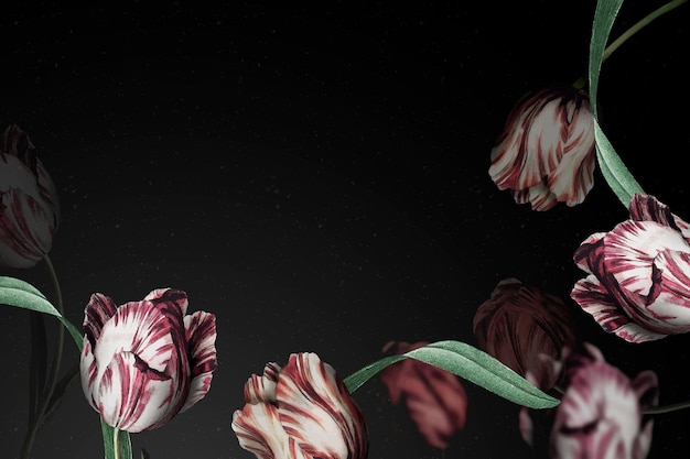 Tulipan granicy dramatyczny kwiat tła