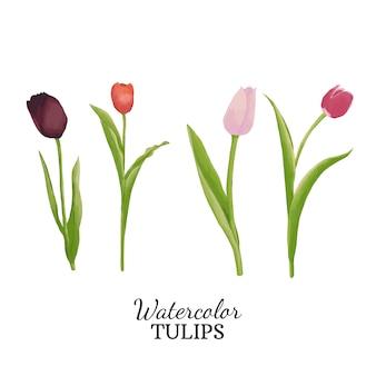 Tulipany akwarela