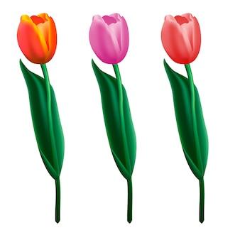 Tulipany kolorowe. realistyczna ilustracja.
