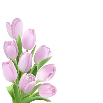 Tulipany na białym tle. różowe kwiaty w lewym rogu.