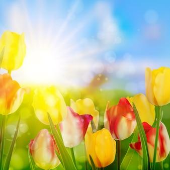 Tulipany rosnące w ogrodzie na zielono.