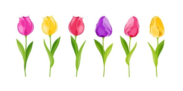 Tulipany są żółte, czerwone, fioletowe. zestaw delikatnych kwiatów. rozkwit. ilustracja w stylu kreskówki.