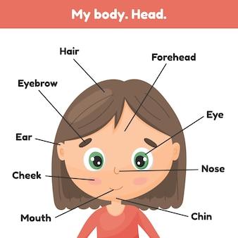 Twarz mała śliczna dziewczyna. plakatowe części głowy do pochylania anatomii dla dzieci.