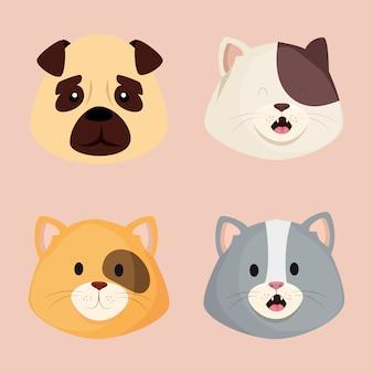 Twarze ślicznych małych kotów z psem
