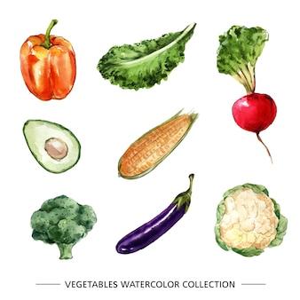 Twórczy na białym tle akwarela warzyw