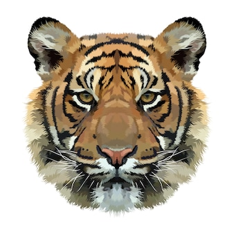 Tygrys głowa odizolowywająca na białym tle