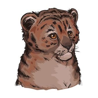 Tygrys lew dziecko, portret na białym tle szkicu egzotycznych zwierząt. ręcznie rysowane ilustracji.