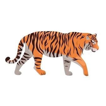 Tygrys na białym tle.
