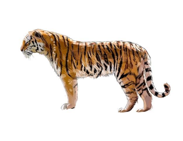 Tygrys z odrobiną akwareli, kolorowy rysunek, realistyczny.