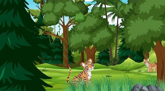 Tygrysy w lesie w scenie dziennej z wieloma drzewami