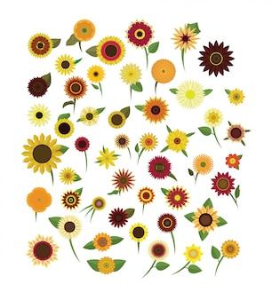 Typ słonecznika ilustracja