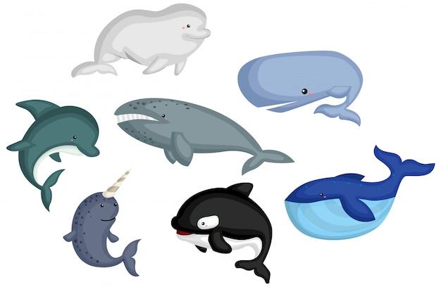 Typ wielorybów