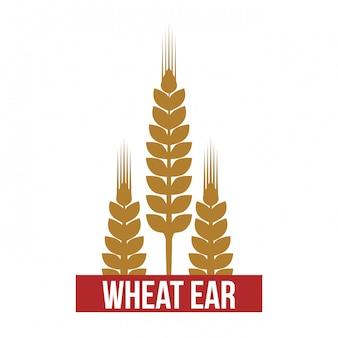 Ucho pszenicy