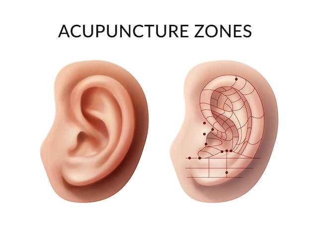 Ucho z punktami akupunktury i strefami refleksów na białym tle