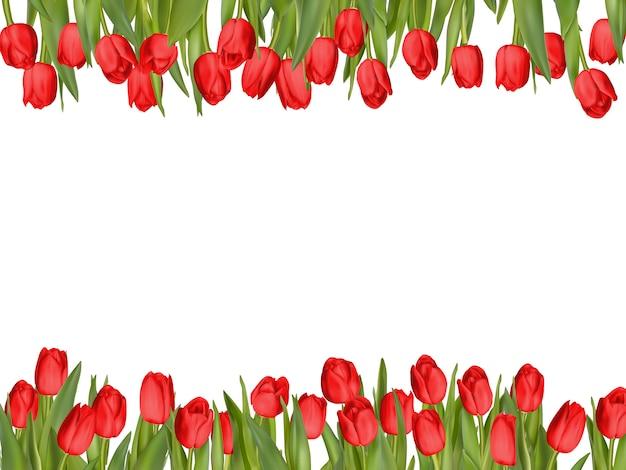 Układ ramki na białym tle tulipan.