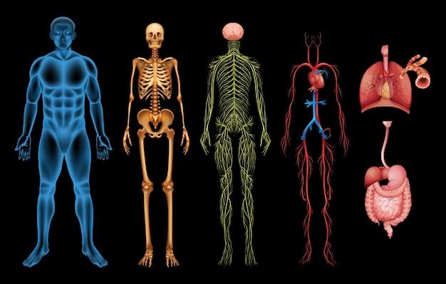 Układy ludzkich ciał