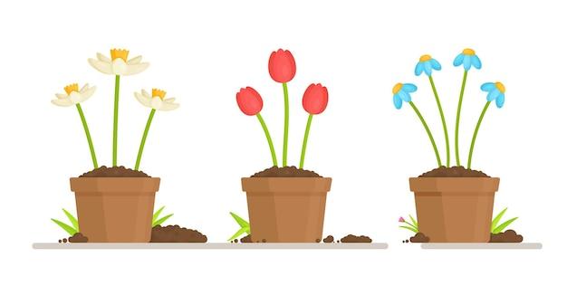 Uprawa kwiatów w doniczkach. ilustracja pracy ogrodnika. osobisty ogród warzywny i kwiatowy.
