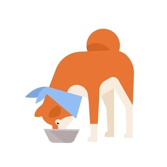 Urocza akita inu jedząca z karmnika. rasowe japoński pies towarzyszący na białym tle. codzienna aktywność zwierzęcia domowego lub domowego. ilustracja wektorowa kolorowe w stylu cartoon płaskie.