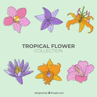 Urocza ręcznie rysowane kolekcja tropikalny kwiat