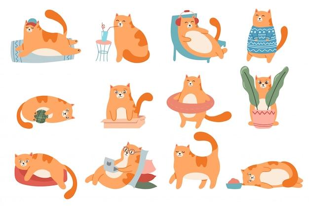 Urocze koty. kot w pudełku, śliczny czerwony kotek do spania i gruby kot w futrzanym swetrze zestaw ilustracji. styl życia zwierząt domowych. komiks zwierzaka w okularach działa na laptopie, pijąc naklejki koktajlowe