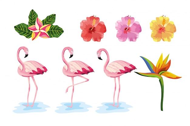 Ustaw egzotyczne kwiaty z tropikalnymi zwierzętami flamingów