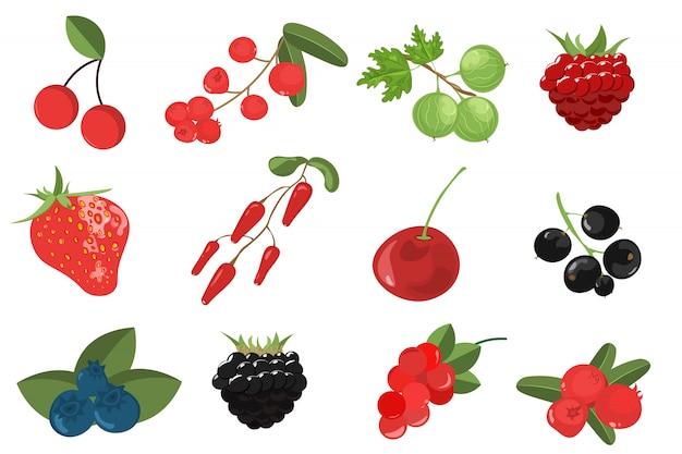 Ustaw gałęzie, jagody i liście.