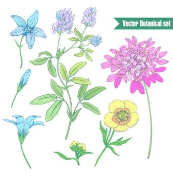 Ustaw kwiaty na białym tle