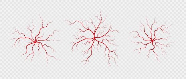 Ustaw ludzkie żyły i tętnice. czerwone, rozgałęzione naczynia krwionośne i naczynia włosowate w kształcie pająka. ilustracja wektorowa na przezroczystym tle
