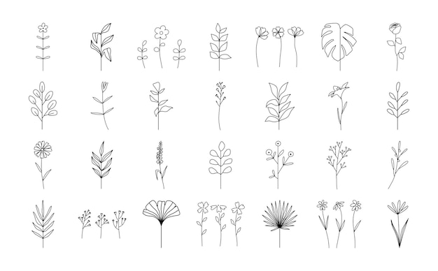 Ustaw modny abstrakcyjny kwiatowy minimalistyczny oddział botaniczny i liście