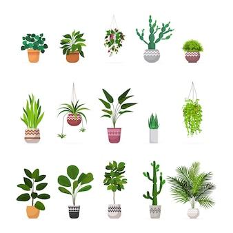 Ustaw ozdobne rośliny doniczkowe sadzone w doniczkach ceramicznych różne kolekcje roślin doniczkowych ogrodowych na białym tle