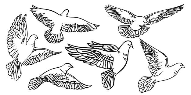 Ustaw ptaki w locie. gołębie na białym tle sylwetki i kontury. ilustracja wektorowa