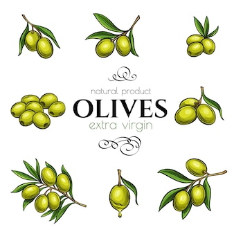 Ustaw ręcznie rysowane oliwki