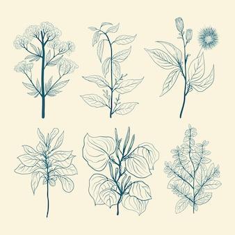 Ustaw ręcznie rysowane zioła dziki kwiat w stylu vintage