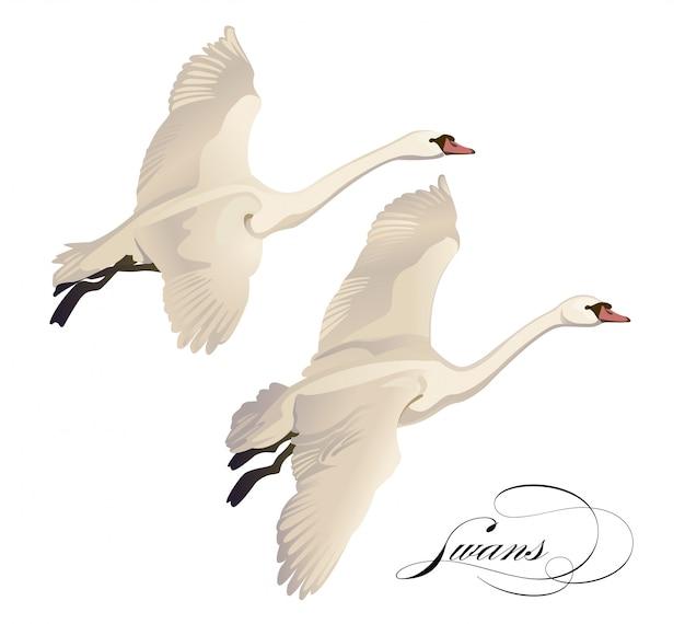Ustaw rysunek flying swans. ręcznie rysowane, doodle projekt graficzny z ptaków