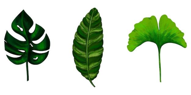 Ustaw tropikalne liście.